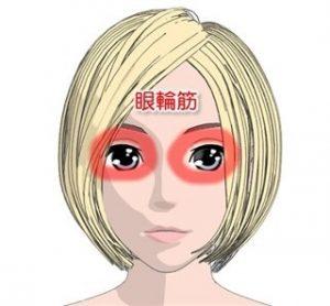 眼輪筋は目の周りを覆っている筋肉